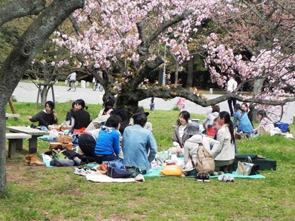 Giao tiếp với người Nhật dễ hay khó 4