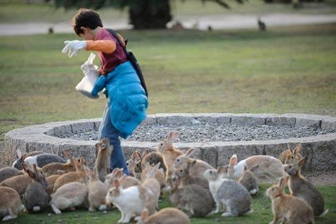 6 điểm du lịch hút khách du lịch tại Nhật Bản