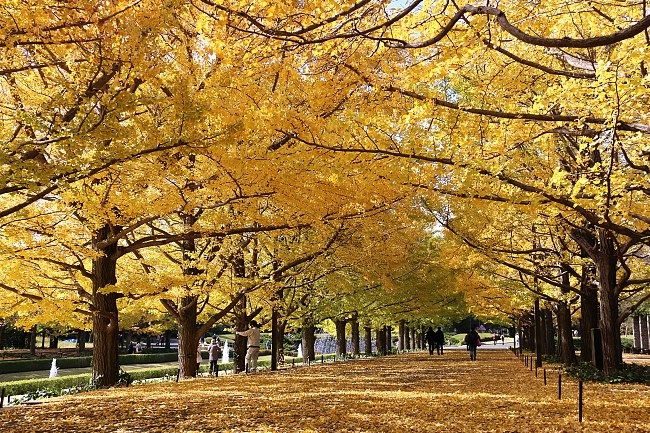 Những địa điểm ngắm mùa lá đỏ lý tưởng nhất tại Nhật Bản