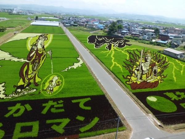 Nghệ thuật trồng lúa