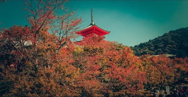 Chùm ảnh: Mùa thu Nhật Bản đã níu chân du khách thế này