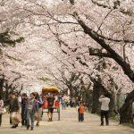 Lễ hội hoa anh đào: Không chỉ ở Nhật Bản! 9