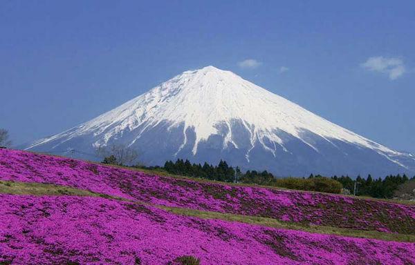 Núi Phú sĩ vào mùa xuân