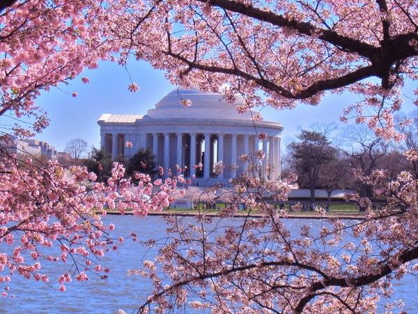 Lễ hội hoa anh đào quốc tế tại Washington DC, Mỹ