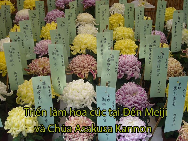 Triển lãm hoa cúc tại Đền Meiji và Chùa Asakusa Kannon