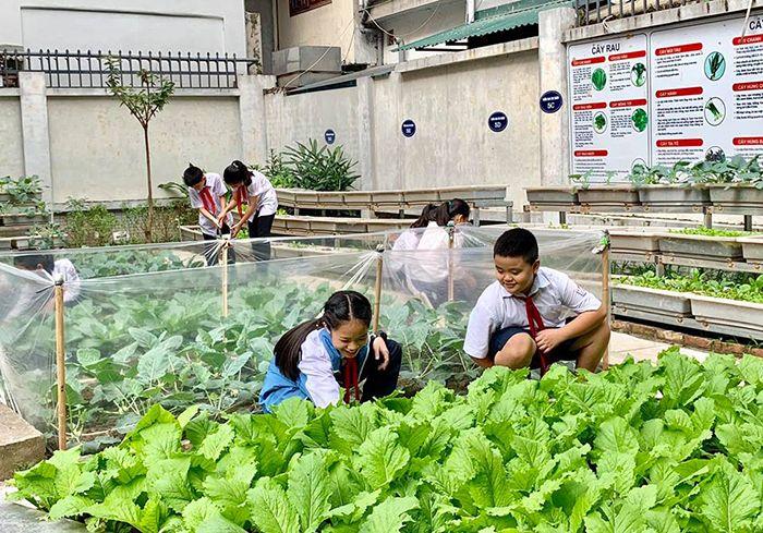 Vườn thực nghiệm trường TH Chu Văn An - Trường tiểu học tốt nhất tại Hà Nội