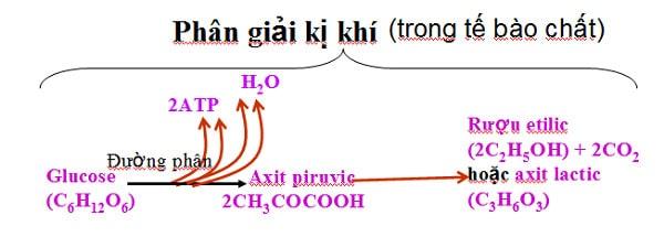 Quá trình hô hấp kị khí
