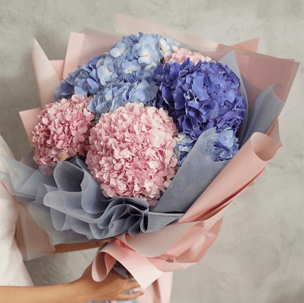 Nên tặng hoa cẩm tú cầu cho thầy cô giáo nhân ngày 20/11