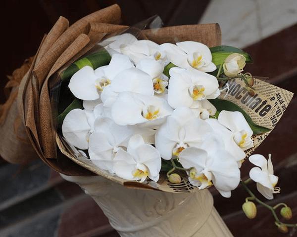 Nên tặng hoa Lan hồ điệp chothầy cô giáo nhân ngày 20/11