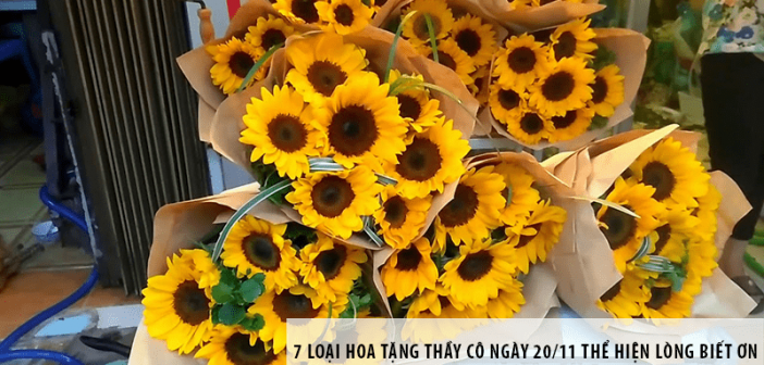 7 loại hoa tặng thầy cô ngày 20/11 thể hiện lòng biết ơn